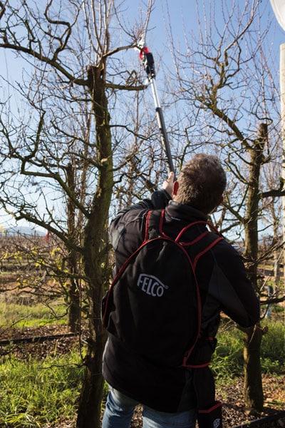 Felco Verlängerung Baum- und Rebscheren in Aktion